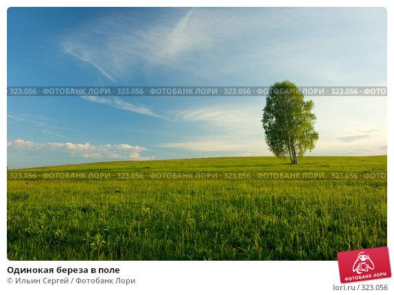 Одинокая береза в поле, фото № 323056, снято 14 июня 2008 г. (c) Ильин Сергей / Фотобанк Лори