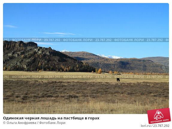 Купить «Одинокая черная лошадь на пастбище в горах», фото № 23787292, снято 6 октября 2016 г. (c) Olivas / Фотобанк Лори