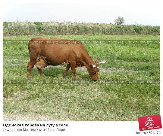 Одинокая корова на лугу в селе, фото № 301172, снято 25 мая 2008 г. (c) Фиронов Максим / Фотобанк Лори