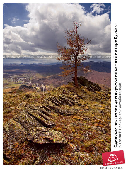 Купить «Одинокая лиственница и дорожка из камней на горе Куркак», фото № 243600, снято 5 мая 2007 г. (c) Евгений Прокофьев / Фотобанк Лори