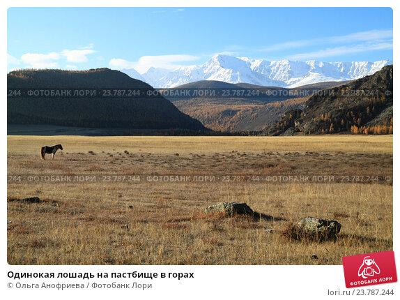 Купить «Одинокая лошадь на пастбище в горах», фото № 23787244, снято 6 октября 2016 г. (c) Olivas / Фотобанк Лори