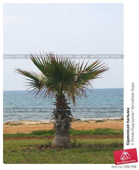 Одинокая пальма, фото № 206768, снято 13 апреля 2006 г. (c) Юлия Селезнева / Фотобанк Лори