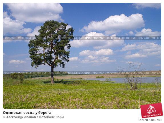 Одинокая сосна у берега, фото № 306740, снято 26 апреля 2017 г. (c) Александр Иванов / Фотобанк Лори