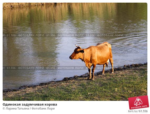 Одинокая задумчивая корова, фото № 61556, снято 28 июня 2007 г. (c) Ларина Татьяна / Фотобанк Лори
