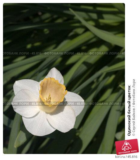 Одинокий белый цветок, фото № 45816, снято 16 мая 2007 г. (c) Сергей Байков / Фотобанк Лори