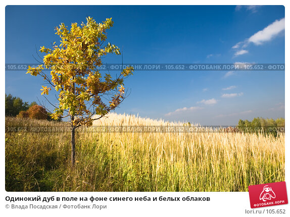 Купить «Одинокий дуб в поле на фоне синего неба и белых облаков», фото № 105652, снято 24 ноября 2017 г. (c) Влада Посадская / Фотобанк Лори