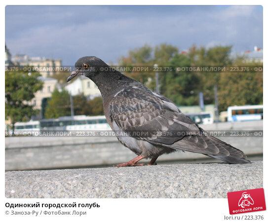 Одинокий городской голубь, фото № 223376, снято 25 сентября 2005 г. (c) Заноза-Ру / Фотобанк Лори