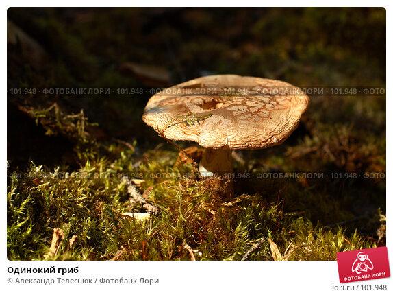 Купить «Одинокий гриб», фото № 101948, снято 5 августа 2007 г. (c) Александр Телеснюк / Фотобанк Лори