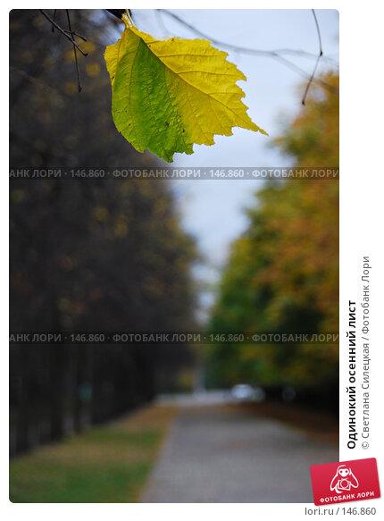 Одинокий осенний лист, фото № 146860, снято 5 октября 2007 г. (c) Светлана Силецкая / Фотобанк Лори