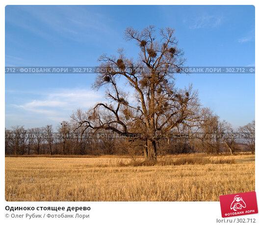 Одиноко стоящее дерево, фото № 302712, снято 13 декабря 2007 г. (c) Олег Рубик / Фотобанк Лори