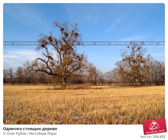 Одиноко стоящее дерево, фото № 304432, снято 13 декабря 2007 г. (c) Олег Рубик / Фотобанк Лори
