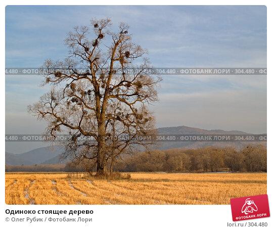 Одиноко стоящее дерево, фото № 304480, снято 13 декабря 2007 г. (c) Олег Рубик / Фотобанк Лори