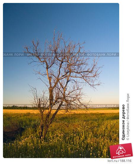 Одинокое дерево, фото № 188116, снято 10 августа 2007 г. (c) Liseykina / Фотобанк Лори