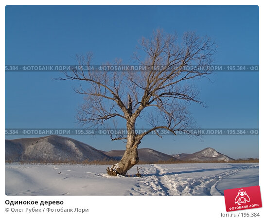 Одинокое дерево, фото № 195384, снято 27 января 2008 г. (c) Олег Рубик / Фотобанк Лори