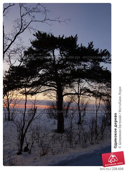 Купить «Одинокое дерево», фото № 238604, снято 19 марта 2018 г. (c) Шемякин Евгений / Фотобанк Лори