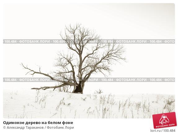 Одинокое дерево на белом фоне, фото № 100484, снято 24 марта 2017 г. (c) Александр Тараканов / Фотобанк Лори