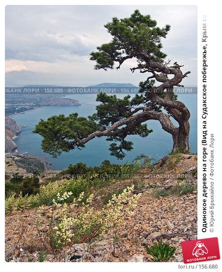Одинокое дерево на горе (Вид на Судакское побережье, Крым со скалы Сокол), фото № 156680, снято 8 июня 2006 г. (c) Юрий Брыкайло / Фотобанк Лори