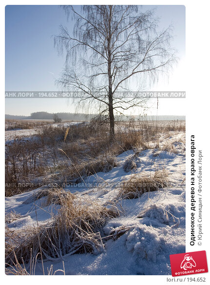 Одинокое дерево на краю оврага, фото № 194652, снято 8 января 2008 г. (c) Юрий Синицын / Фотобанк Лори
