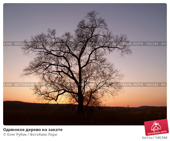 Одинокое дерево на закате, фото № 144544, снято 6 ноября 2007 г. (c) Олег Рубик / Фотобанк Лори