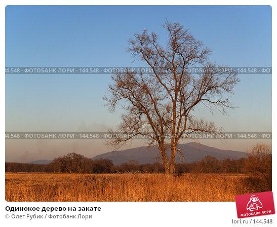 Одинокое дерево на закате, фото № 144548, снято 4 ноября 2007 г. (c) Олег Рубик / Фотобанк Лори