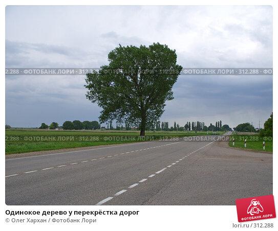 Купить «Одинокое дерево у перекрёстка дорог», фото № 312288, снято 3 июня 2008 г. (c) Олег Хархан / Фотобанк Лори
