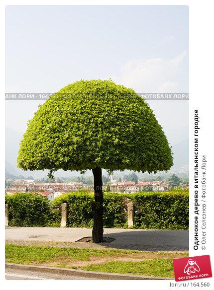 Купить «Одинокое дерево в итальянском городке», фото № 164560, снято 8 мая 2007 г. (c) Олег Селезнев / Фотобанк Лори