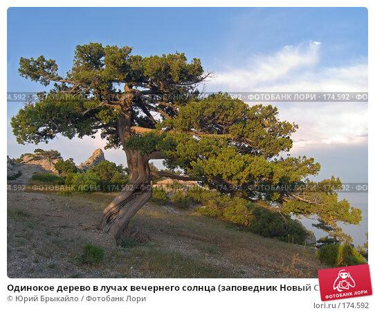 Одинокое дерево в лучах вечернего солнца (заповедник Новый Свет, Крым, Украина), фото № 174592, снято 5 июня 2006 г. (c) Юрий Брыкайло / Фотобанк Лори