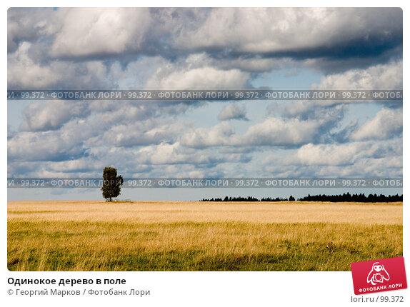 Одинокое дерево в поле, фото № 99372, снято 18 сентября 2005 г. (c) Георгий Марков / Фотобанк Лори
