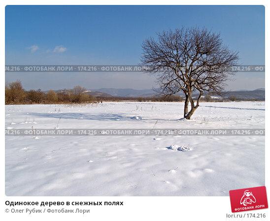 Одинокое дерево в снежных полях, фото № 174216, снято 12 января 2008 г. (c) Олег Рубик / Фотобанк Лори