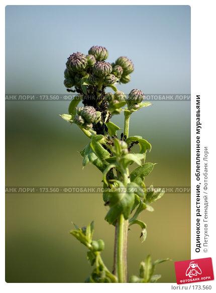 Одинокое растение, облепленное муравьями, фото № 173560, снято 11 июня 2007 г. (c) Петухов Геннадий / Фотобанк Лори