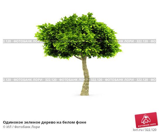 Одинокое зеленое дерево на белом фоне, иллюстрация № 322120 (c) ИЛ / Фотобанк Лори