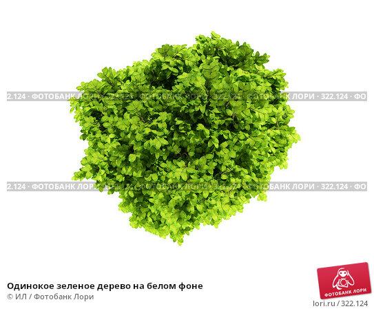 Одинокое зеленое дерево на белом фоне, иллюстрация № 322124 (c) ИЛ / Фотобанк Лори