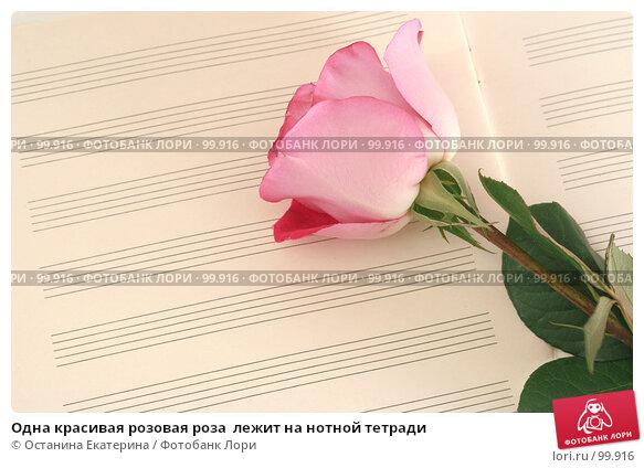 Одна красивая розовая роза  лежит на нотной тетради, фото № 99916, снято 12 октября 2007 г. (c) Останина Екатерина / Фотобанк Лори
