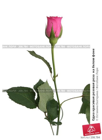 Одна красивая розовая роза  на белом фоне, фото № 208784, снято 19 января 2008 г. (c) Останина Екатерина / Фотобанк Лори