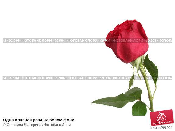 Одна красная роза на белом фоне, фото № 99904, снято 12 октября 2007 г. (c) Останина Екатерина / Фотобанк Лори