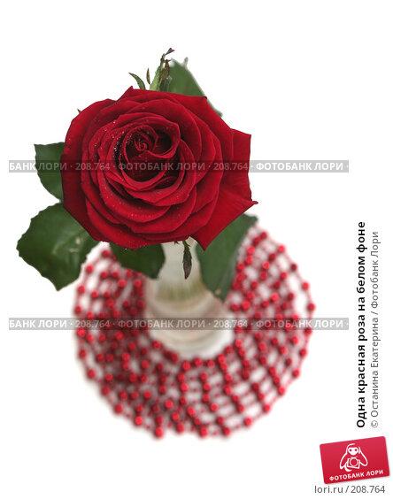 Одна красная роза на белом фоне, фото № 208764, снято 15 января 2008 г. (c) Останина Екатерина / Фотобанк Лори