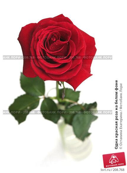 Купить «Одна красная роза на белом фоне», фото № 208768, снято 15 января 2008 г. (c) Останина Екатерина / Фотобанк Лори