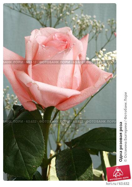 Одна розовая роза, фото № 63632, снято 13 июля 2007 г. (c) Останина Екатерина / Фотобанк Лори
