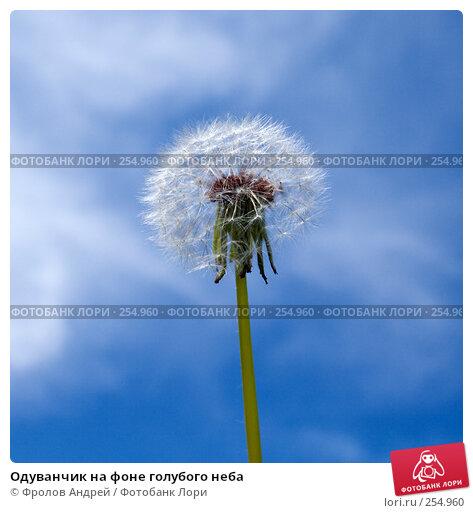 Купить «Одуванчик на фоне голубого неба», фото № 254960, снято 12 апреля 2008 г. (c) Фролов Андрей / Фотобанк Лори