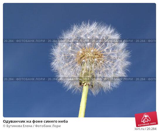 Одуванчик на фоне синего неба, фото № 20284, снято 17 июня 2006 г. (c) Бутинова Елена / Фотобанк Лори