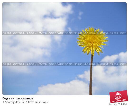 Купить «Одуванчик-солнце», фото № 35200, снято 23 апреля 2007 г. (c) Shamigulov P.V. / Фотобанк Лори