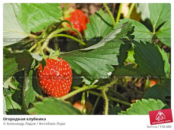 Огородная клубника, фото № 118440, снято 14 июля 2007 г. (c) Александр Лядов / Фотобанк Лори