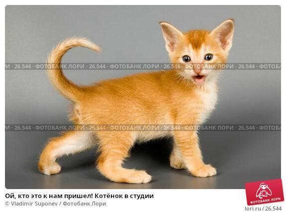Ой, кто это к нам пришел! Котёнок в студии, фото № 26544, снято 17 марта 2007 г. (c) Vladimir Suponev / Фотобанк Лори