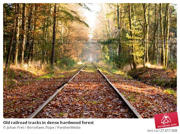 Купить «Old railroad tracks in dense hardwood forest», фото № 27817908, снято 17 июля 2019 г. (c) PantherMedia / Фотобанк Лори
