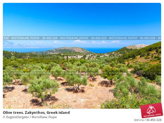 Olive trees. Zakynthos, Greek island (2016 год). Стоковое фото, фотограф EugeneSergeev / Фотобанк Лори