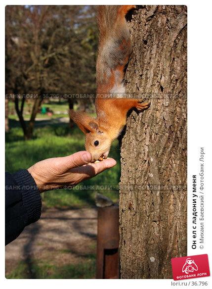 Он ел с ладони у меня, фото № 36796, снято 29 апреля 2007 г. (c) Михаил Баевский / Фотобанк Лори