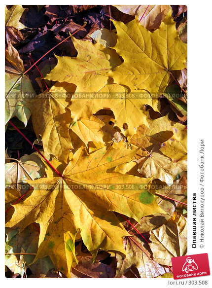 Опавшая листва, фото № 303508, снято 10 декабря 2016 г. (c) Николай Винокуров / Фотобанк Лори