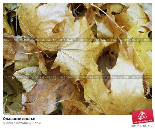 Купить «Опавшие листья», фото № 84712, снято 10 ноября 2005 г. (c) only / Фотобанк Лори