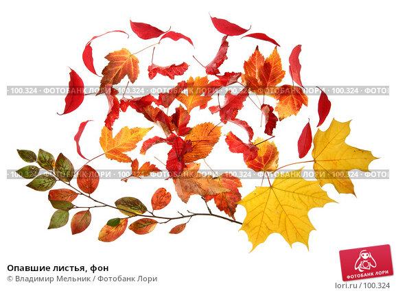 Опавшие листья, фон, фото № 100324, снято 27 сентября 2007 г. (c) Владимир Мельник / Фотобанк Лори