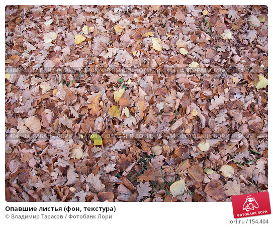 Опавшие листья (фон, текстура), фото № 154404, снято 19 октября 2005 г. (c) Владимир Тарасов / Фотобанк Лори